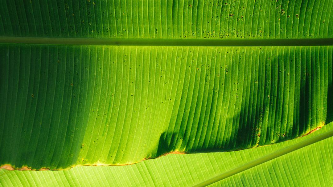 Leef – kompostierbare Einwegteller aus Palmblättern