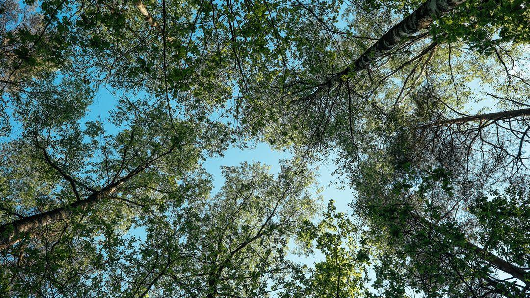Waldkindergarten Trudering: Aufwachsen in der Natur