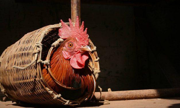 Was bedeuten die verschiedenen Tierhaltungsformen?
